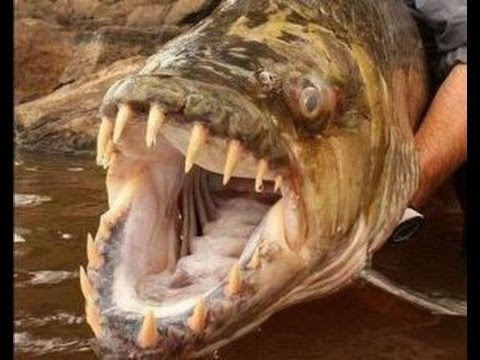 NG   Canavar Balıklar: Moğolistan'ın Korkunç Alabalıkları