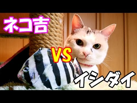 ГVSЦЦЦЦЦЕёГЦФЦЦReal fish cat toy