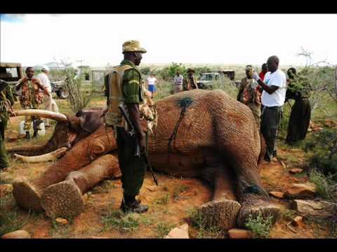 Shot elephant rescued in Kenya