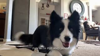 Border Collie Bravo 1 year dog tricks-Fun with Pup and Jane