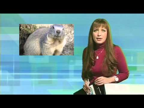 Десна-ТВ: День за днем от 1.02.2016 г.