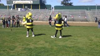 Hilmar Yellowjacket Mascots At The Relay For Life