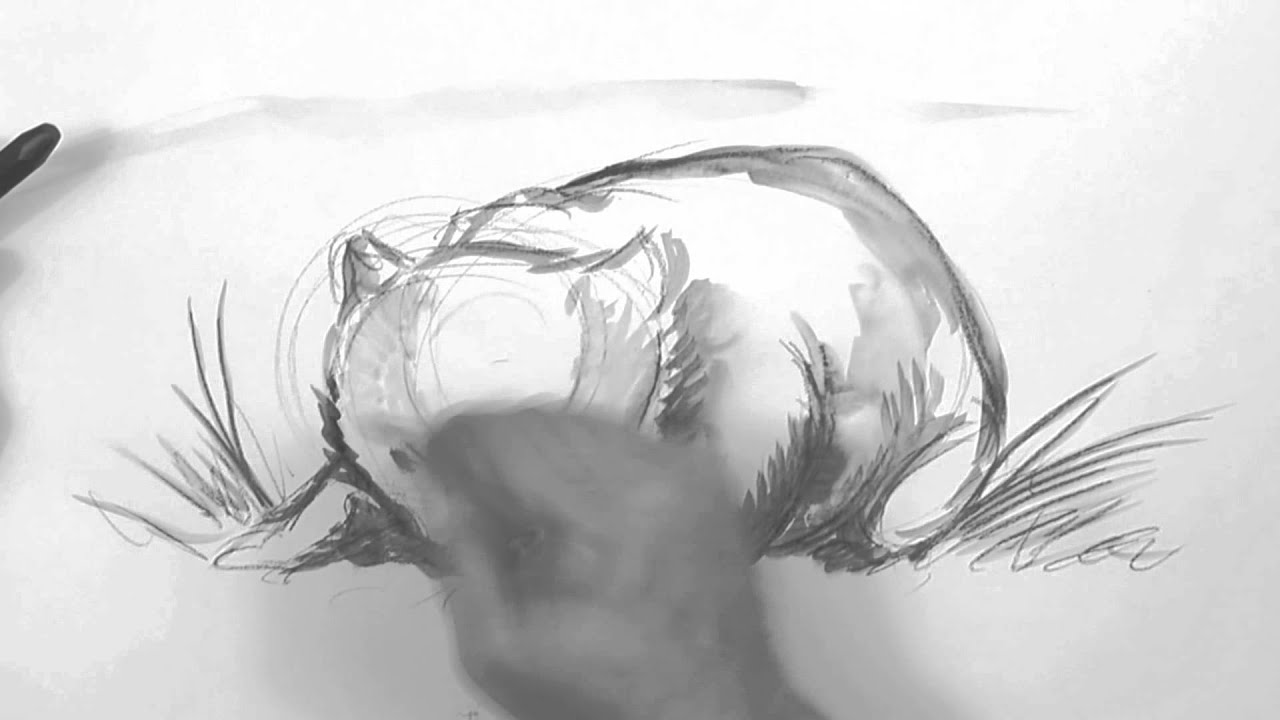 Wombat Drawing Speed Video  Wombat Drawing