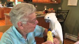 20150905 Mr. Darcy cockatoo and Papa share lunch