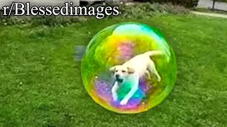 r/Blessedimages | BUBBLE DOG