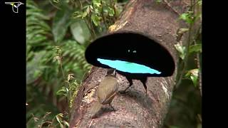 Birds-of-Paradise Project - ,,Райские птицы,,