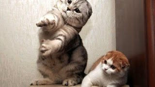 Cats dancing to music - funny cat dance compilation