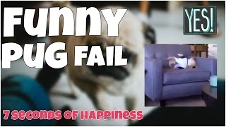 Funny pug fail 🔸 7 second of happiness FUNNY Video 😂 #361