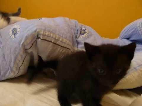 Zabawa Małych Kotków