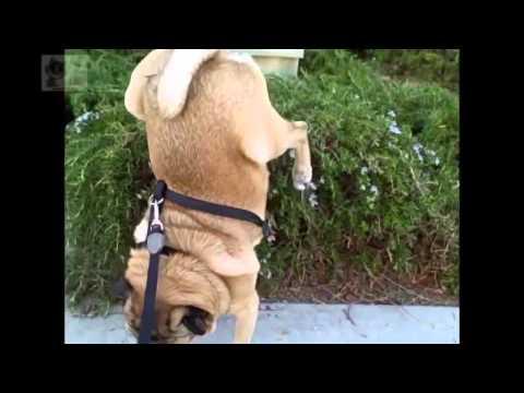 BEST FUNNY ANIMALS COMPILATION 2013 2014 Лучшая нарезка видео с животными 2