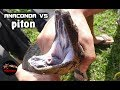 Anaconda Vs Python Vs Cobra Snake Fights To Death Hd