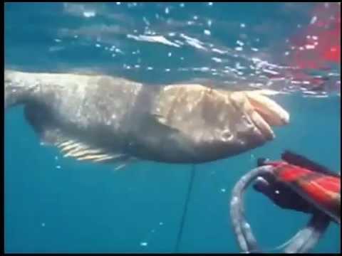 Spearfishing in gibraltar -Spain
