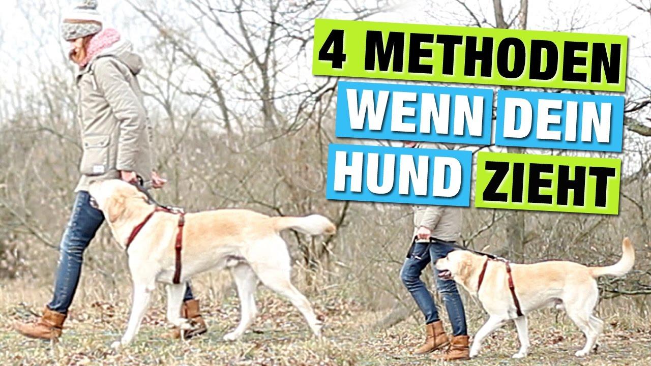 Methoden hund bei fuß laufen beibringen hundeerziehung