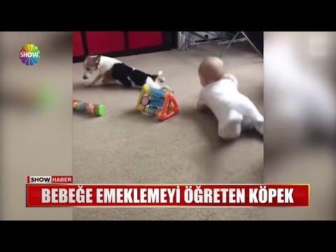 Bebeğe emeklemeyi öğreten köpek