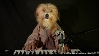 Dogs playing music - Barbara's Animal World