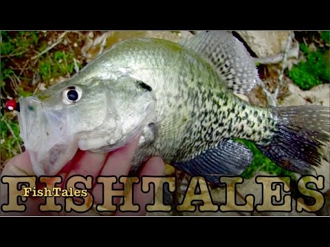 Crappie Crazy Terrific Tuesday