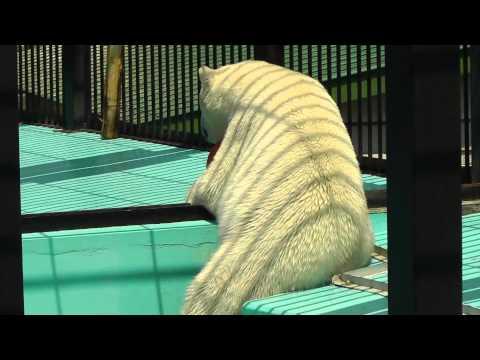 2011年5月26日 おびひろ動物園 ホッキョクグマのイコロ2