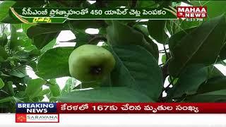 తెలంగాణ లో ఆపిల్ సాగు | Apple cultivation In Telangana | Adilabad District