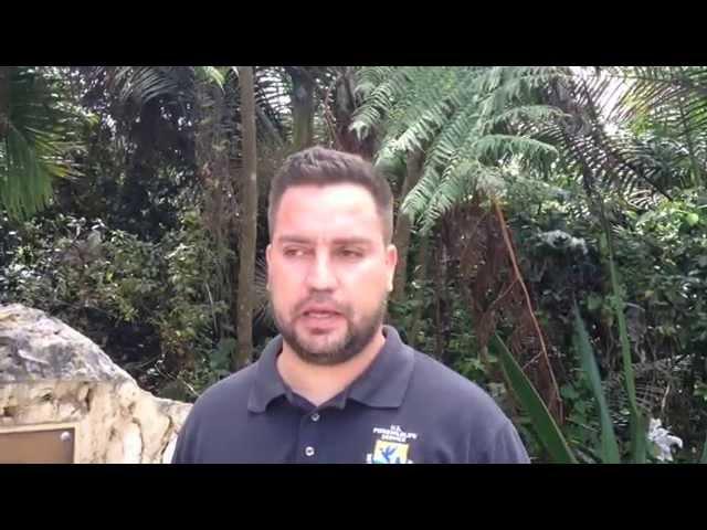 La película 'Rio 2' llegará en apoyo a la conservación de la cotorra puertorriqueña