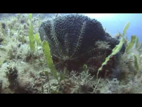 """Diving in Damnoni Bay (west edge), Southern Crete  - Greece in fall 2008 Filmed with Sony HC46 in an Ikelite housing, wide angle, red filter, no artificial light.  Buddyette : Joanna Music : Kastrierte Philosophen - """"Rub the word""""  www.jeromesmeets.be"""