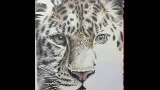 Time lapse of Amur leopard drawing