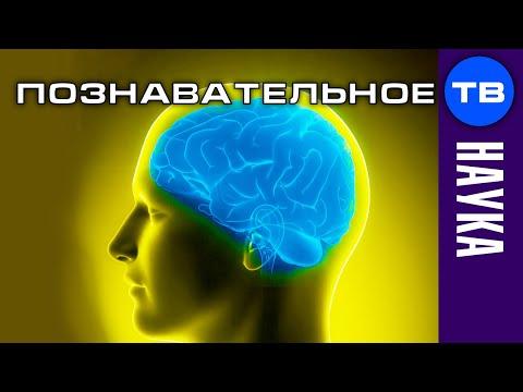 Виртуальность мозга: программирование реальности (Познавательное ТВ, Дмитрий Мыльников)