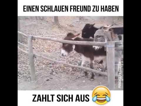 Auch Tiere sind klug