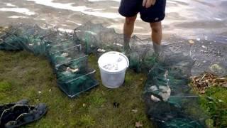 запахи для ловли раков