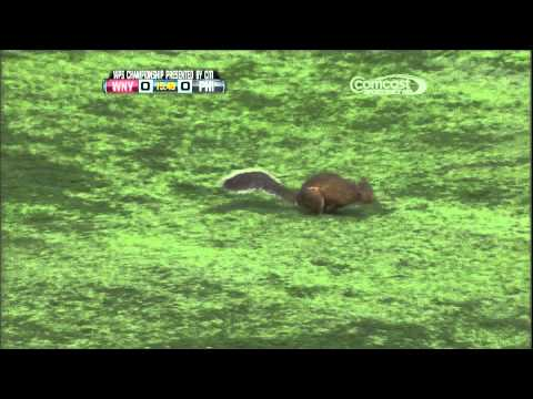 Womens Professional Soccer Squirrel on Field