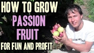 How to Grow Passion Fruit for Fun and Profit