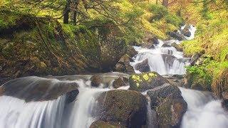 "Sleep Music, Peaceful music, Stress reducing music, ""Forest Rain"" by Tim Janis"