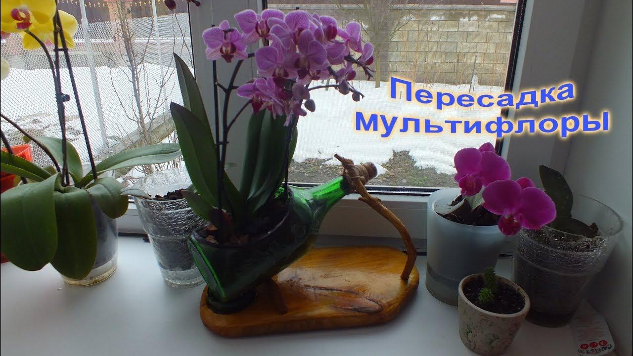 Как правильно сажать орхидею в горшок 82