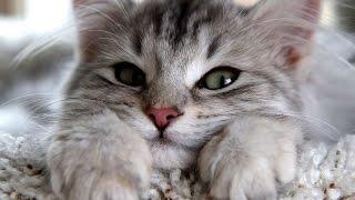 Katzen treffen ihre Besitzer nach langer zeit wieder!