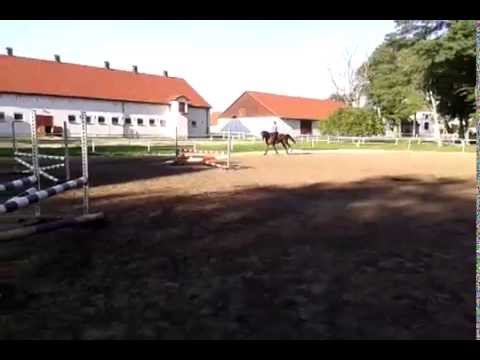 Trening 27.10.2014 (70-80 cm)