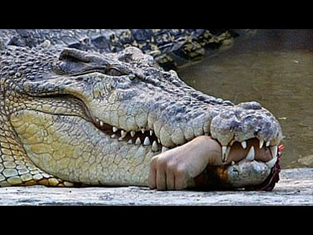 Pastor Eaten By Crocodile After Trying To Perform Miracle