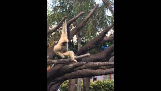 Funny video - Monkey sniffing his butt