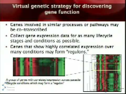 Virtual, Chemical and Synthetic Genetics of Malaria
