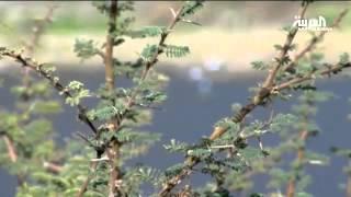 سد وادي بيش.. من أكبر السدود في السعودية