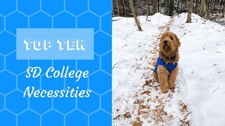 TOP TEN Service Dog Necessities in College