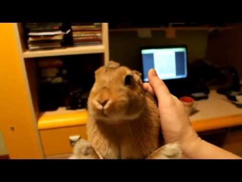 Rabbit eats