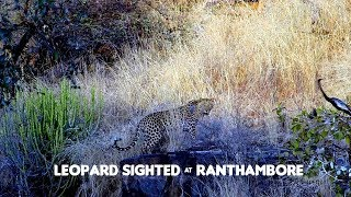 Close Encounter | Ranthambore Leopard Sighting