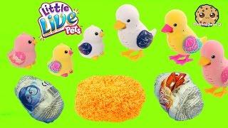 Little Live Pets Duck Mom & Baby - Unboxing 2 Chocolate Surprise Eggs + Shopkins Blind Bag