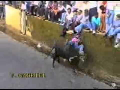 Funny Portuguese Bullfight video
