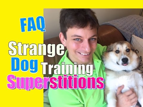 Do You Believe These 2 Common Dog Training Superstitions? Faq video