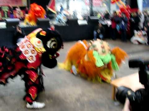 Lion Dancing Ireland Lion Dance Celebrated