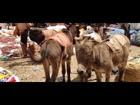 A Chinese owned donkey slaughterhouse in Ethiopia has been closed...