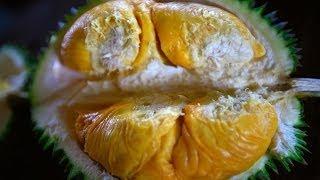 Bao Sheng Durian Farm Durian tasting with Bao Sheng the best organic durian in the world!
