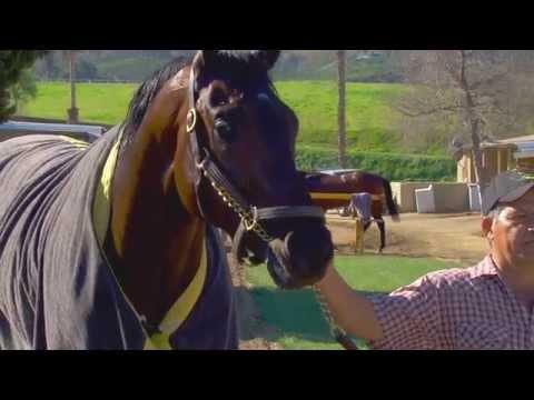 Kentucky Derby Contender Prospect Park | San Felipe Feature