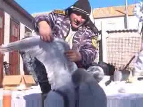 Люди спасли замерзающего в лимане лебедя