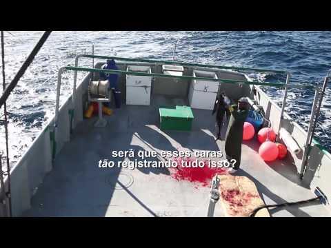 Barco japon ês domina pesca de atum em águas do Brasil